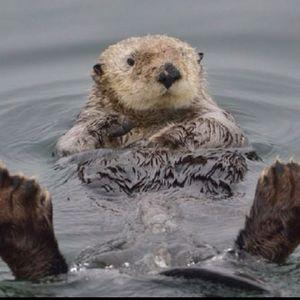 Otter's Pocket