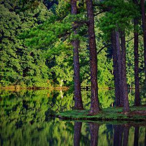 Taslinkov - A walk through the woods