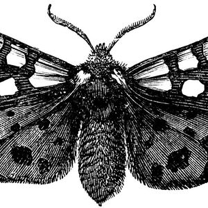 The Morning Moth (68)