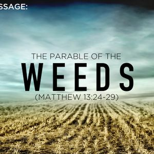 Weeds:  A parable of Jesus