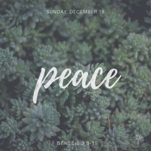 12/18/2016 Genesis 3:8-15