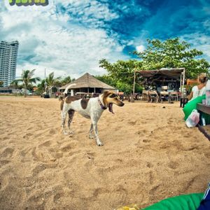 Dennis Frost - Pattaya Sunrise II