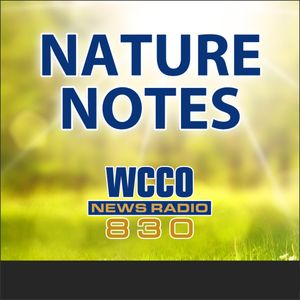 3-18-18 Nature Notes