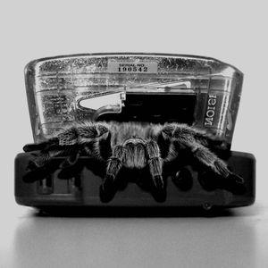 Highly Deadly Black Tarantula - Dissident Dj