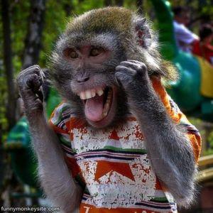 Monkey Adventure