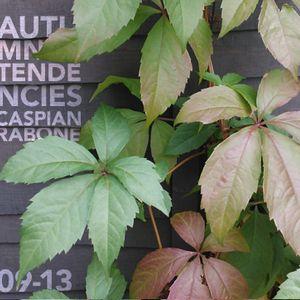 Caspian Rabone Autumnal Tendencies Mix