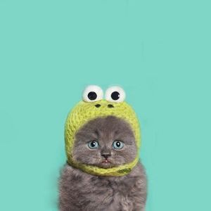 Sasha Exact - Cat Against Sadness