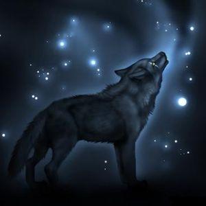 Bens Wolves Mix