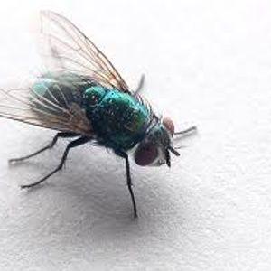 Doctor Hooka-Pretty Fly (aka Power S.O.S)