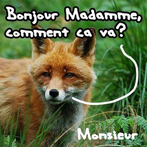 Bonjour Madamme! (Comment ça va?)