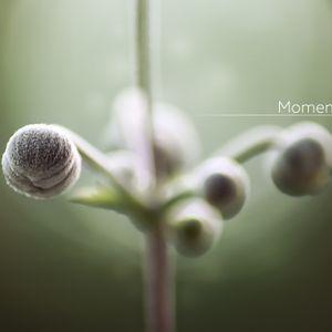 #356: Planet Boelex / Moments