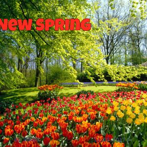Ruguy Mix 135 - New spring