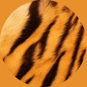 Tiger Mix. Summer and poolside friendly.