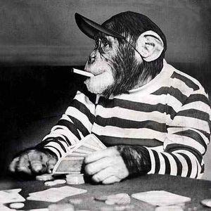 Munky Bizness - Monkey Playtime 2012-09-15