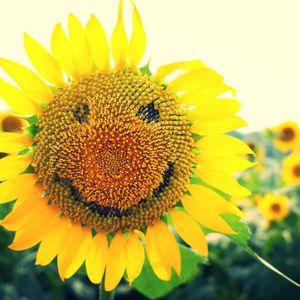 The Sun Seeds // idk (11/11/16) @ Amateur Radio