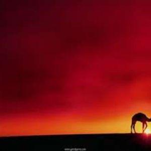 El Caminante Del Desierto