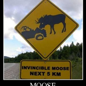 Da Moose Is Loose . . . 20.12.2016