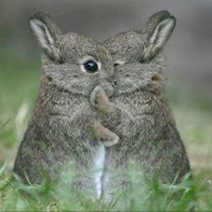 Bunny! 3/21/16