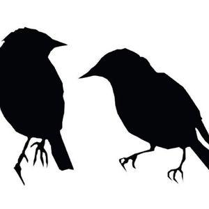 Sedentary Birds Live for Elektrosfera Radio