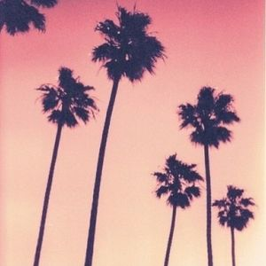 Jamie Saint - Palm Tree Sunset