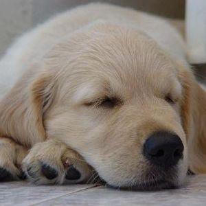 Dog Behaviourist Noel Murphy