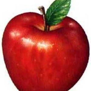 Zooka  -  Ella Quiere Una Manzana