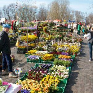 Tuvojas Stādu parāde Siguldā. Stādaudzētāji rādīs labāko