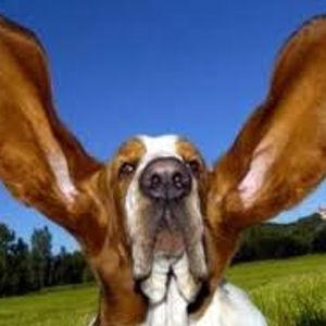 use your ears now