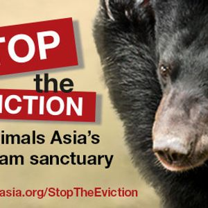 Fighting bear bile farming until all cruelty ends - Animals Asia's Jill Robinson interview
