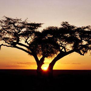 petar_africa