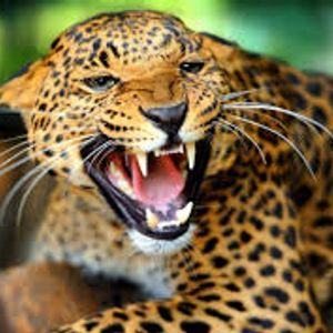 Jaguar parte 1 (Mars 1-5, 5/14)