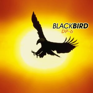 DP-6 - Black Bird