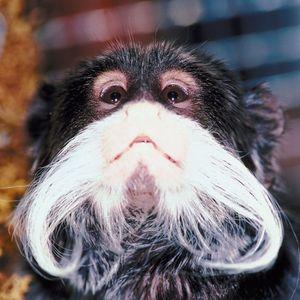 Beard Brawl Mix