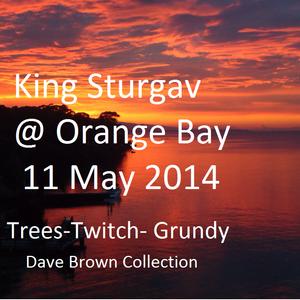Sturgav @  Orange Bay _P Grundy- Twitch- G Trees_ selector Donovan  11 May 2014 (DBcd)