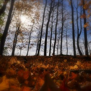 autumn in slow motion