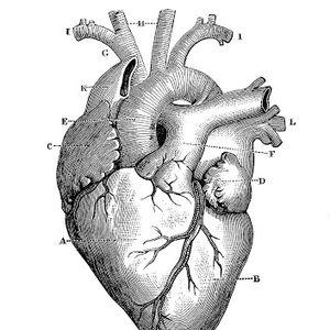 Enlarged Heart Radio 25