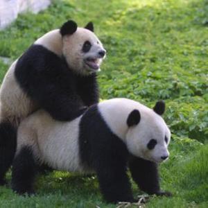 Happy Hardcore....Panda Style !!