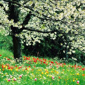 Spring Breath!