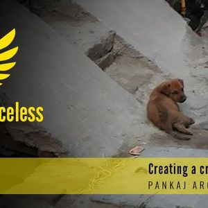 Guardians of the voiceless - helping animals in India