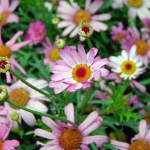 Květinový hudební večírek Madam Lily