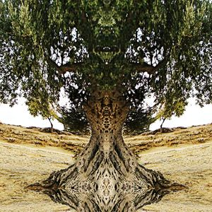 Michael Brückner - The Silent Scent of Olives Part 3 - Live Session