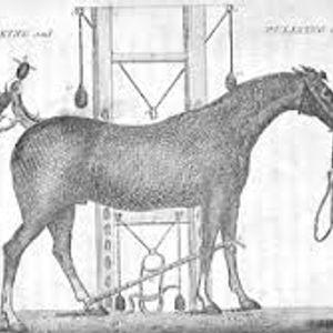 Horse Dick Jurist