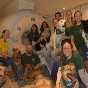 A kutyák agya az emberéhez hasonlóan reagál - MR1, Közelről (részlet)