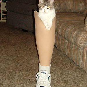 Kitty Limb Edition