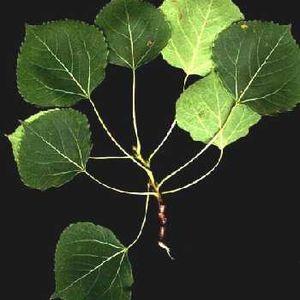 Botany S08