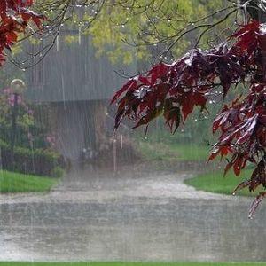 Burgundy Monsoon