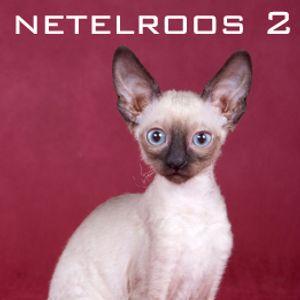 Netelroos II