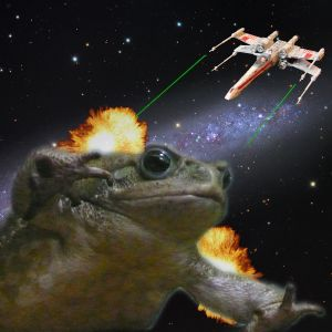 Simmer Down:  Chronicles of Space Frog