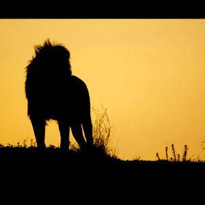 Life in the Jungle VOL.3