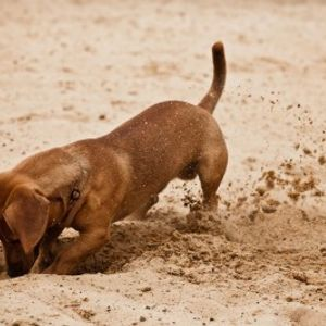 just keep diggin'